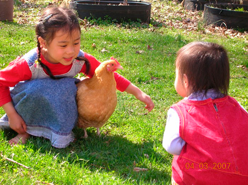 Two Little Asian Girls Playing With A Chicken